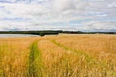 быть фермером scottish Стоковая Фотография