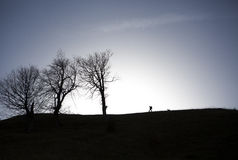 Былинная прогулка Стоковые Фото