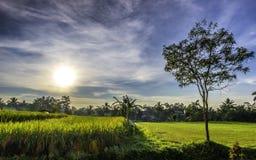 Былинный пейзаж восхода солнца, оно ` s красивое когда солнечный свет осветит дерево и заводы Стоковые Фотографии RF