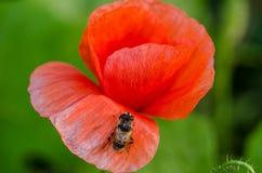 Были в цветке Стоковое Фото