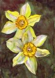 Благородный желтый цвет цветет daffodils иллюстрация штока