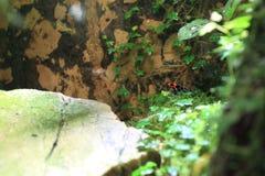 Благословленная лягушка дротика отравы Стоковые Фотографии RF