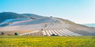 Благоустраивайте взгляд к снежному винограднику и зеленому лугу стоковая фотография