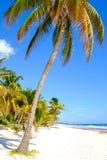 Благоустраивайте взгляд спокойного пляжа с пальмами, Tulum Стоковая Фотография