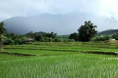 Благоустраивайте зеленое поле риса в сельской местности, Чиангмае, Таиланде Стоковое Фото