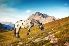 Благоустраивайте Италию, доломиты - на лошади запятнанной восходом солнца пася самостоятельно на утесах Стоковые Изображения