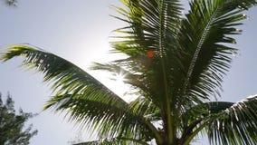 Блески солнца за пальмой сток-видео