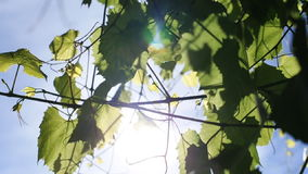 Блески солнца через деревья видеоматериал