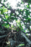 Блески солнца через джунгли Стоковое Изображение