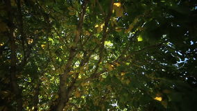 Блески солнца через листья видеоматериал