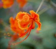 Блеск весны цветка, красивый стоковая фотография rf