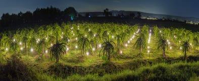 Блеск дракона сада панорамы на ноче Стоковое фото RF
