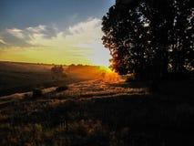 Блеск через деревья Стоковая Фотография RF