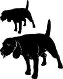 блестящий Бигль собаки Vector изображение бигля собаки на белой предпосылке иллюстрация вектора