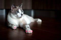 Блестящий кот стоковое изображение rf