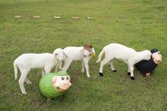 Блеянье-овечка Стоковые Изображения RF