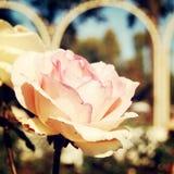 Бледная осень подняла в парк Gorky - ретро фильтр Стоковое Изображение RF