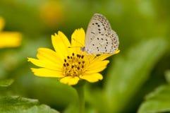 Бледная синь травы Стоковые Изображения RF