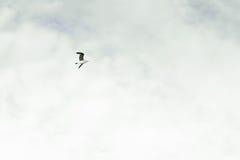 Бледное небо при птица летая над ей Полет птицы Концепция свободы, простоты и минимализма Стоковая Фотография RF