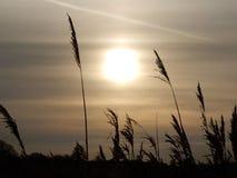 Бледное солнце зимы Стоковая Фотография RF
