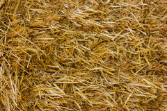 близкая земная текстура сторновки вверх Солома или сено текстуры Стоковые Фото