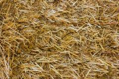 близкая земная текстура сторновки вверх Солома или сено текстуры Стоковое Изображение