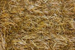 близкая земная текстура сторновки вверх Солома или сено текстуры Стоковое фото RF