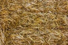 близкая земная текстура сторновки вверх Солома или сено текстуры Стоковое Изображение RF