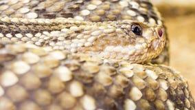 близкая змейка вверх Желтый цвет и чернота Запачканная предпосылка Стоковое фото RF
