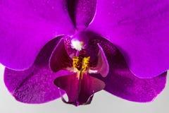 близкая орхидея вверх стоковые фотографии rf