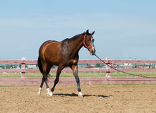 близкая лошадь вверх Стоковое Изображение RF