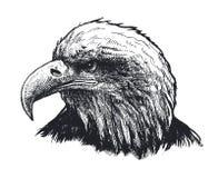 близкая стойка головки орла стоя вверх также вектор иллюстрации притяжки corel Стоковое Изображение