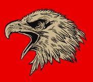 близкая стойка головки орла стоя вверх Стоковая Фотография