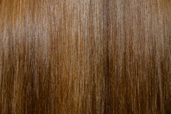 близкая текстура съемки волос вверх Стоковые Изображения
