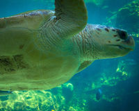 близкая черепаха моря вверх Стоковые Изображения