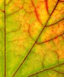 близкие листья вверх Стоковое Изображение RF