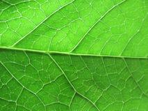 близкие листья вверх Стоковые Фотографии RF