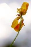 близкие капельки росы засевают вода травой утра листьев совершенная поднимающая вверх Стоковые Фото