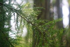 близкие капельки росы засевают вода травой утра листьев совершенная поднимающая вверх Стоковые Изображения RF