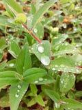 близкие капельки росы засевают вода травой утра листьев совершенная поднимающая вверх Стоковые Изображения
