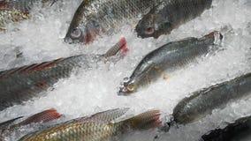 близкие рыбы, котор замерли вверх Стоковое Фото
