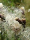 близкие цветки вверх Стоковые Фотографии RF