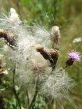 близкие цветки вверх Стоковое Фото