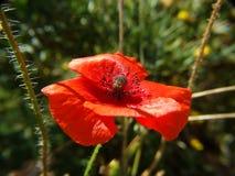 близкие цветки вверх Стоковое Изображение