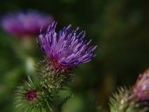 близкие цветки вверх Стоковые Фото