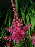 близкие цветки вверх Стоковая Фотография RF