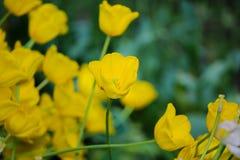 близкие цветки поднимают желтый цвет Стоковые Изображения