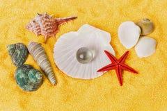 близкие seashells песка вверх Стоковое Изображение RF