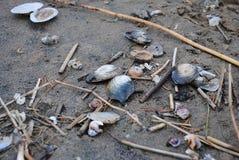близкие seashells песка вверх Стоковое Фото