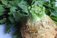 Близкий взгляд шарика celeriac при извлекли стержни, который и в предпосылке стоковая фотография rf
